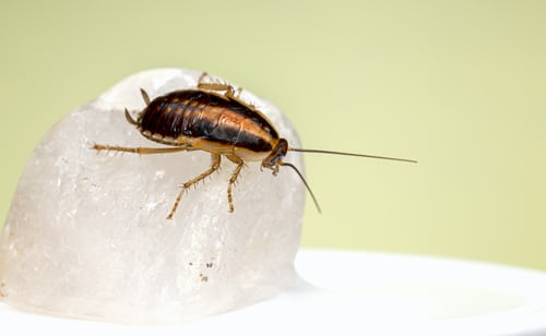 How to Get Rid of Roaches?