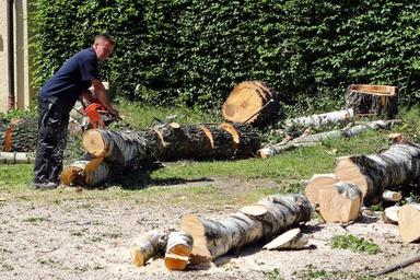 An essential guide on getting the best tree services